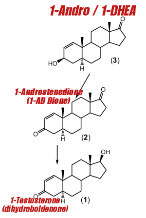 1-Testosterone Synthesis