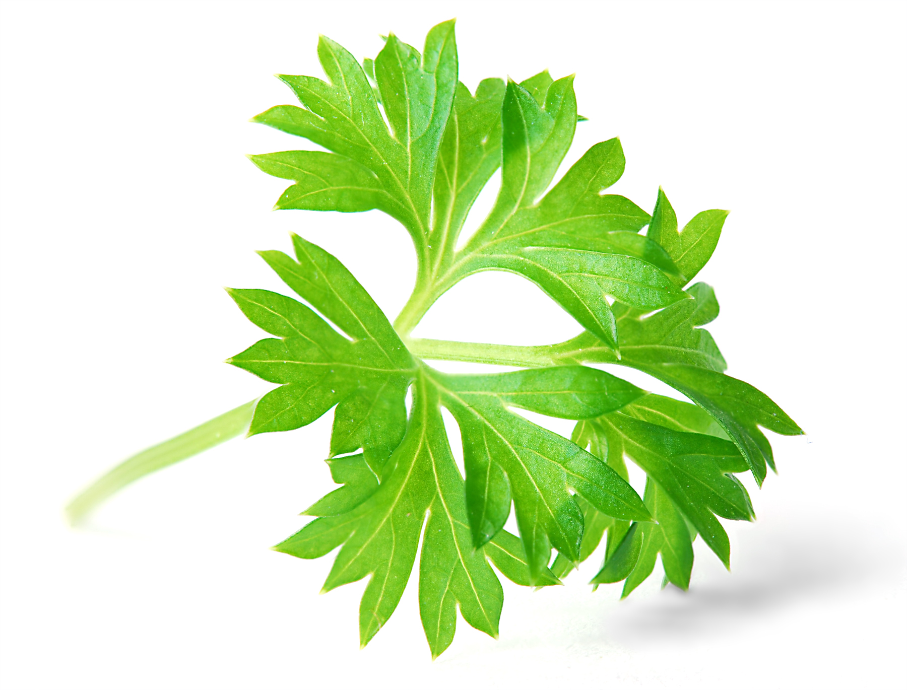 Parsley - Learn, Compare Products, and Save at PricePlow