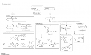 Arachidonic Acid Signaling Map