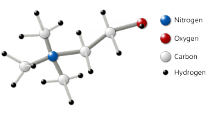 Choline Molecule