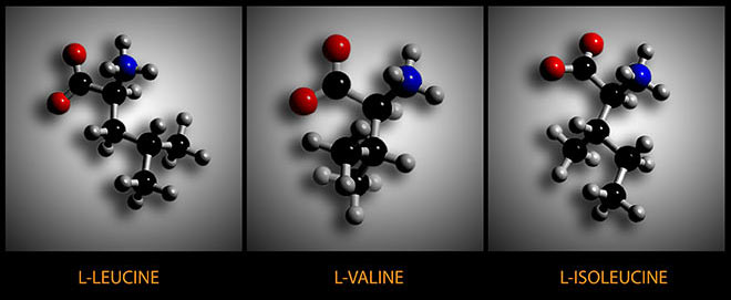 Leucine, valine, and isoleucine are the three BCAAs. Image courtesy of Muscle Gauge (makers of BCAA Extended Performance)