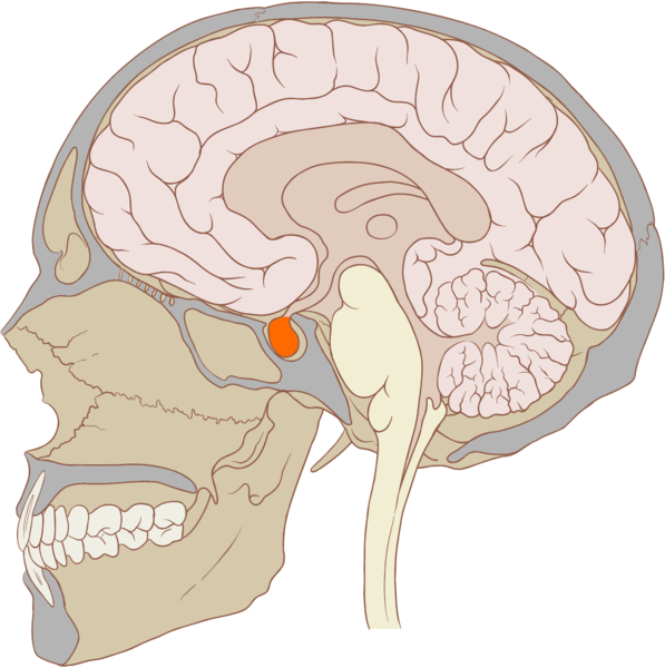 Get your pituitary gland to control your prolactin levels better!