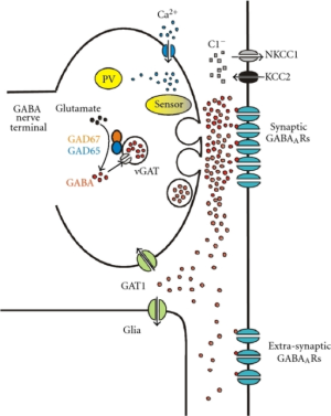 "GABA counters glutamate, one of your ""upper"" neurotransmitters."