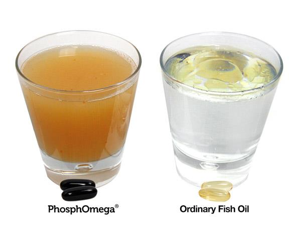 Jarrow Formulas' PhosphOmega has higher bioavailability compared to typical fish oils