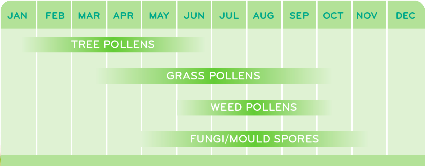 Individuals with a pollen allergy can find themselves suffering for a good portion of the year.
