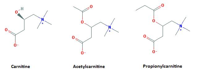Types of Carnitine
