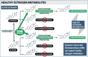 I3C / DIM Estrogen Metabolites