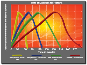 Protein Powder Absorption Rates
