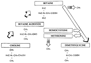 Betaine in Modern Creatine