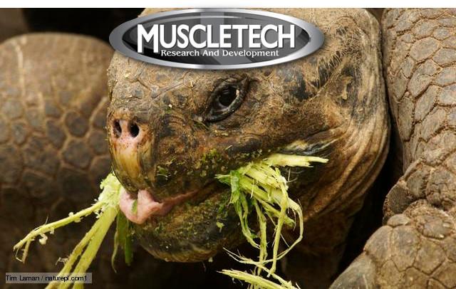 MuscleTech Herbivore