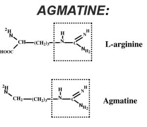 Agmatine and Arginine