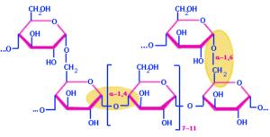 Alpha 1-6 Glycosidic Bond