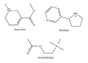 Arecoline Nicotine