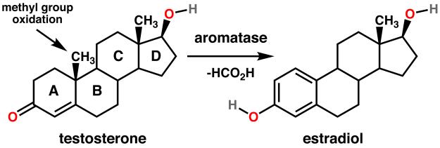 Aromatase Inhibitor