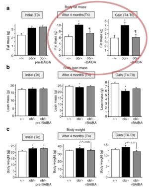 BAIBA Fat Mass Leptin Deficiency