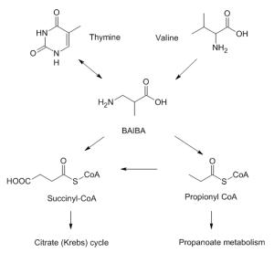 BAIBA Supplements