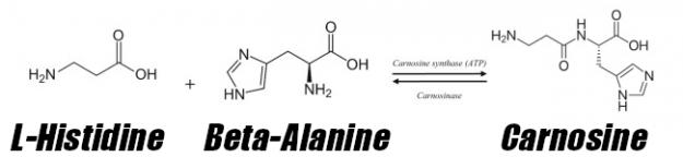 Beta Alanine Carnosine