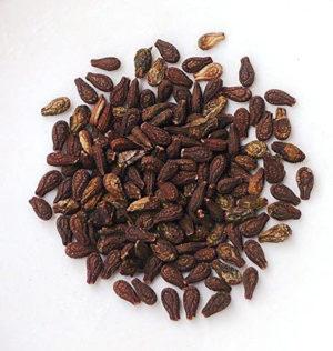 Bryonia Laciniosa Seeds
