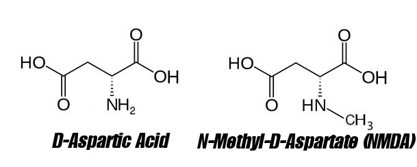 d-aspartic-acid-vs-n-methyl-d-aspartate