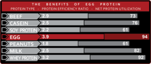5% Nutrition Egg White Chart