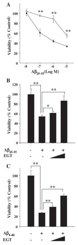 Ergothioneine PC12 Cells