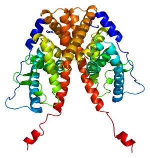 Estrogen Receptor 1