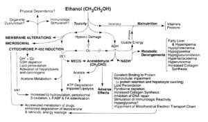 Ethanol Abuse Effects
