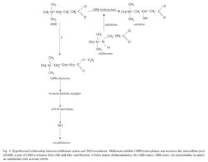 Gamma Butyrobetaine Ethyl Ester Nitric Oxide