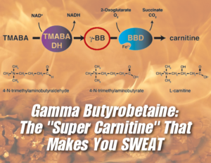 GBB Supplements