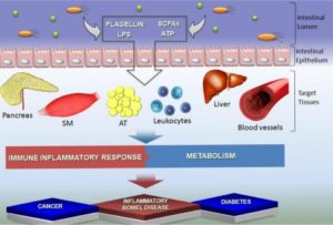 Gut Microbiota Host Tissues
