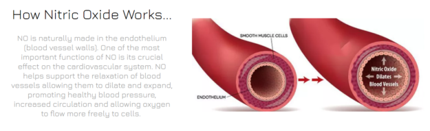 How Nitric Oxide Works