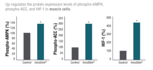 InnoSlim AMPK Muscle Cells
