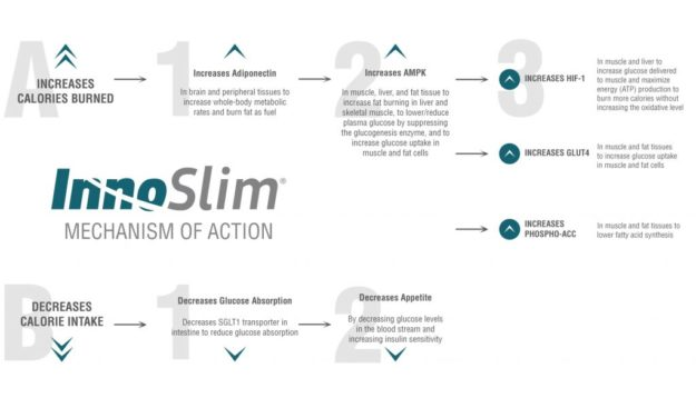 InnoSlim Mechanism of Action