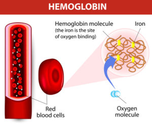 Iron Hemoglobin