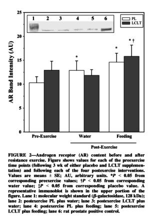 L-Carnitine L-Tartrate Androgen Receptor Content