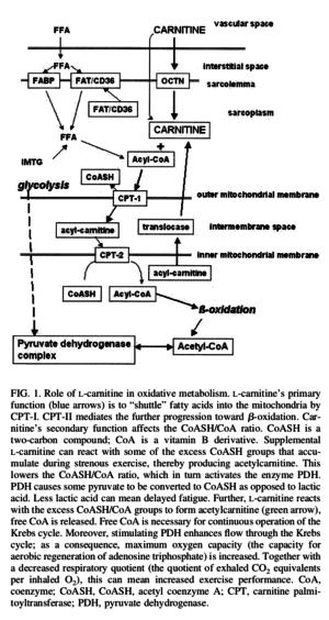 L-Carnitine Oxidative Metabolism