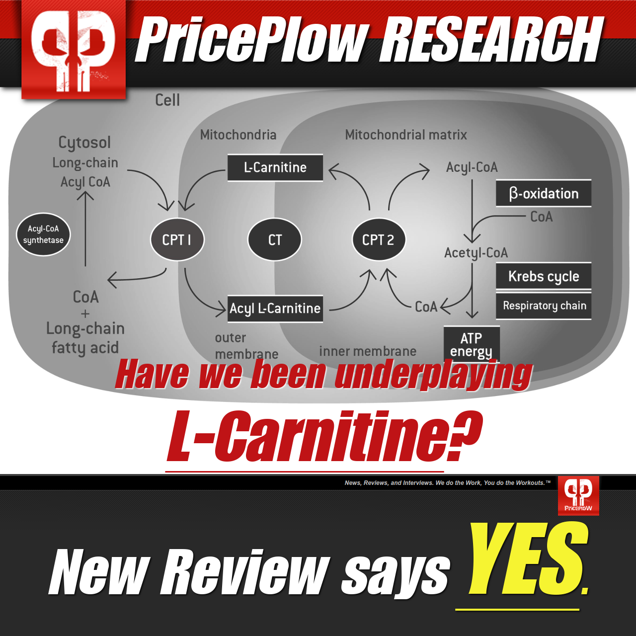 Carnitine how to take