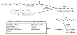 Linoleic Acid HNE