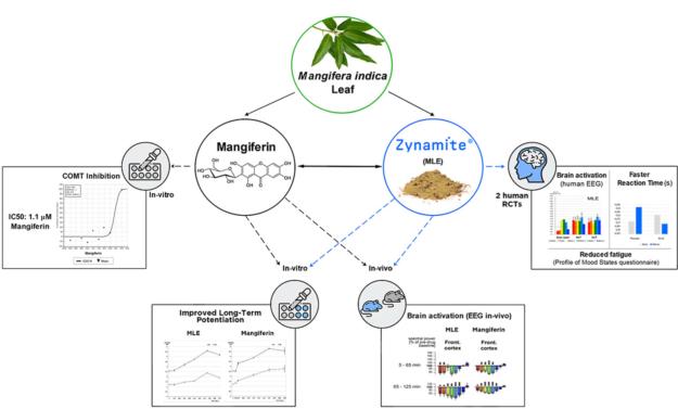 Lopez Rios Zynamite Graph
