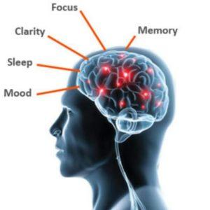 Lumonol Brain
