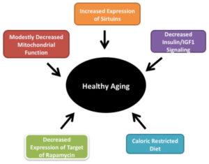 Mitochondria Aging Decline