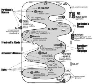 Mitochondria Neurodegeneration