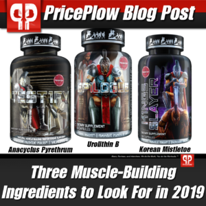 Muscle Building Ingredients