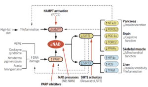 NAD Effects