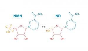 NMN vs NR