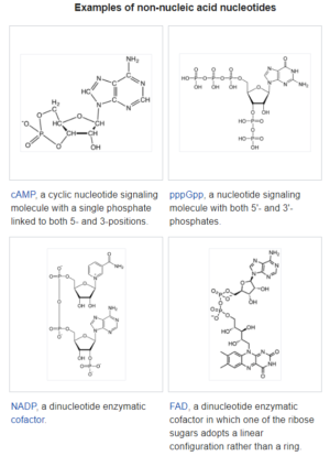 Non Nucleic Nucleotides