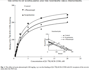 Acute administration of phenotropil (100 mg/kg, intraperitoneally) abolished the pathological scopolamine induced decrease in the density of the dopamine D1 receptor in the striatum.