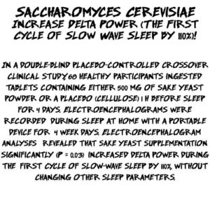Saccharomyces Cerevisiae Study