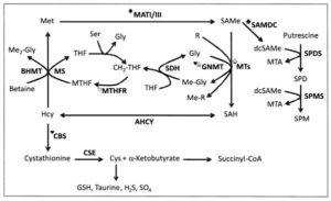 SAMe Liver Metabolism