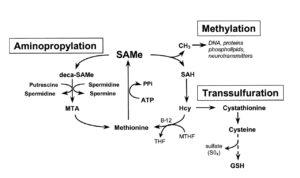 SAMe Metabolism